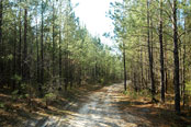 Verdura Properties Holmes Creek Timberlands