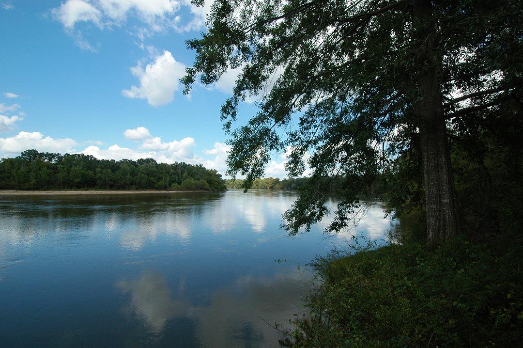 Verdura Properties, LLC | Investment Grade Timberlands